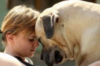 Vecinos de Albardón podrán vacunar sus mascotas en forma gratuita