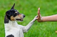 Por qué las mascotas son las mejores aliadas para aliviar la cuarentena