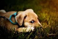 Condenan por primera vez por actuar cruelmente contra un animal
