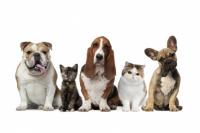 Así es el calendario de Programa de Esterilización de Mascotas
