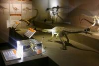 Museo de Ciencias Naturales, un recorrido sobre el origen de los dinosaurios