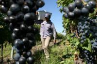 El gobierno provincial y la posibilidad de invertir con Brasil en la vitivinicultura