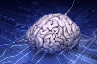 Internet, ¿afecta al cerebro humano?