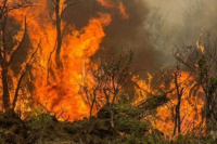 Emilio Baistrocchi sobre los incendios en Valle Fértil: