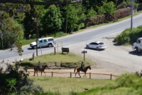 Pruebas piloto en Bariloche para reactivar el turismo,