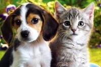 Zonda: esterilización, desparasitación y vacunación gratuita para mascotas en el municipio