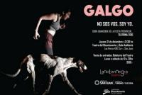 Galgo en el Teatro Del Bicentenario