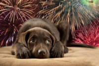 Los consejos para cuidar a tus mascotas de la pirotecnia durante las Fiestas