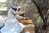 Ambiente y comunidades originarias hicieron la primera cosecha de miel