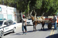 Indignación en las redes sociales por el maltrato a un caballo