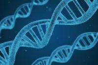El test de ADN puede ayudar a incrementar el rendimiento físico y bajar de peso