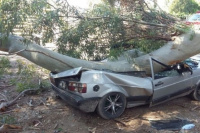 Un auto fue destrozado por la rama de un eucalipto