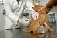 Vacunación antirrábica y desparacitación: mirá dónde llevar a tu mascota en Rivadavia