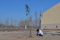La Secretaría de Ambiente realizó un relevamiento forestal en establecimientos educativos