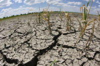 La peor sequía en 70 años: estiman pérdidas de $87.000 millones