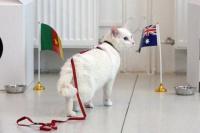 Aquiles, el gato sordo que pronosticará resultados en el Mundial de Rusia