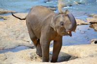 VIDEO: un elefante juguetón se sienta sobre el regazo de una turista