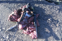 Ullum:Hallan cazadores yles decomisan sus armas