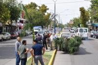 Increíble, en menos de 24 horas se robaron 6 palmeras de la Diagonal