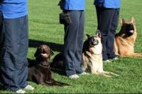 Ullum: Dictarán un seminario de adiestramiento canino