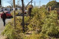 Angaco: piden a los vecinos evitar la poda clandestina y masiva