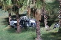 Perdió el control de su camioneta y se estampillo con una palmera