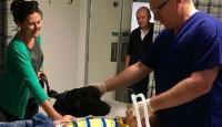 Increíble historia: el perro que nunca deja solo a un niño autista