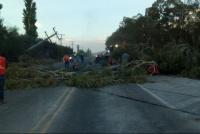 El zonda provocó caídas de postes y cortes en la Ruta 40