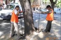 Comenzó la aplicación de insecticida y fertilizantes en árboles