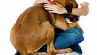 Fiestas de Fin de Año: cómo proteger a las mascotas del uso de pirotecnia