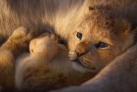 Se lanzó un nuevo trailer de la remake de El rey León