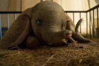 Conocé la dolorosa historia del verdadero Dumbo