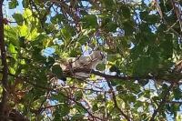 Bomberos cauceteros rescataron a una gata que estuvo cuatro días arriba de un árbol
