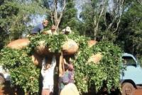 El mate, más caro: la yerba tendrá un incremento de 10% en octubre