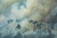 En Brasil, 9.762 kilómetros perdió la Amazonía