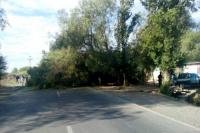 Cayó un árbol de gran porte y destruyó parte de una casa