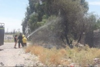 El peor asador del mundo: dejó las brasas cerca de un árbol y casi quema una casa
