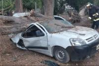 Un gigantesco árbol cayó sobre una camioneta en Ullum