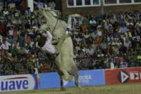 Un jinete quedó grave tras ser aplastado por su caballo
