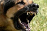 Un bebé de 2 años fue brutalmente atacado por un perro en una casa de Capital