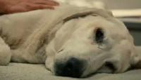 Revelan qué cosas hacen y sienten los perros antes de morir