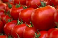 Coronavirus: suspendieron el Congreso Mundial del Tomate en San Juan