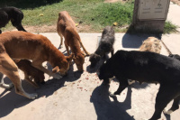 En cuarentena, Capital asiste con alimento a perros en situación de calle