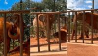Desde Buenos Aires trasladaron a la elefante Mara a Brasil