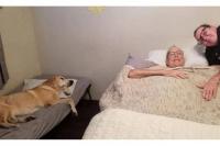 Tenía cáncer, falleció y su perro murió una hora más tarde
