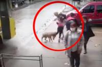 Video: pitbull le destrozaba la pierna a una nena y la gente no podía sacárselo