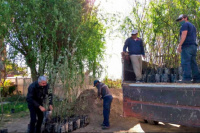 Comienza la primera etapa de forestación en Angaco: plantarán 200 árboles