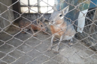 Rescataron a 14 animales que estaban en cautiverio en una vivienda de Caucete
