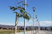 Plan de forestación en el Costanera Complejo Ferial: colocaron 200 árboles