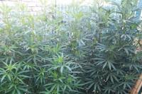 Valle Grande: era buscado por un celular y le secuestraron marihuana